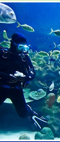 Scuba diving in Coco Beach: scuba diver underwater surrounded by schools of tropical fish.